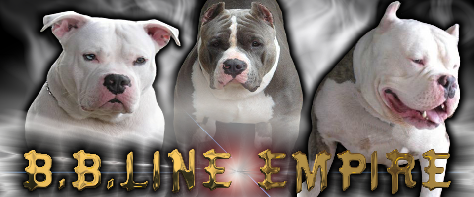 Bloddline's From Hawaii's Big Bully Kennel